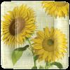 sunflowers1-jpg