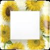 sunflowers2-jpg